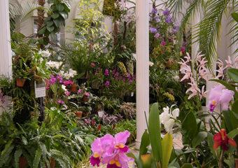 福知山市都市緑化植物園 写真
